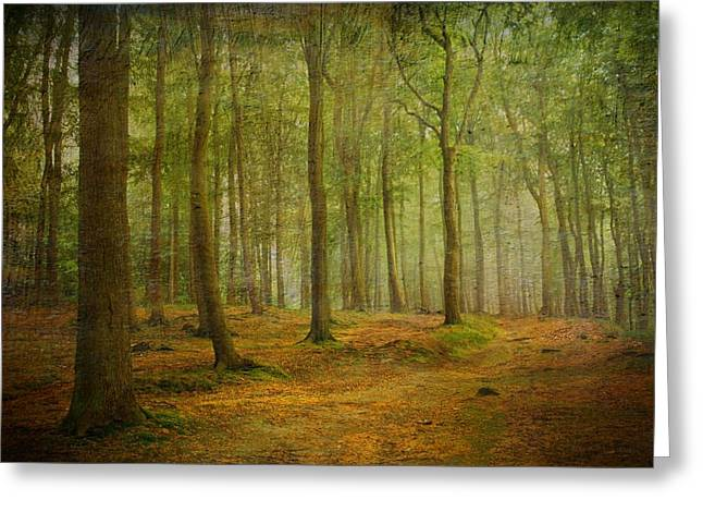 Forest Light 7 Greeting Card