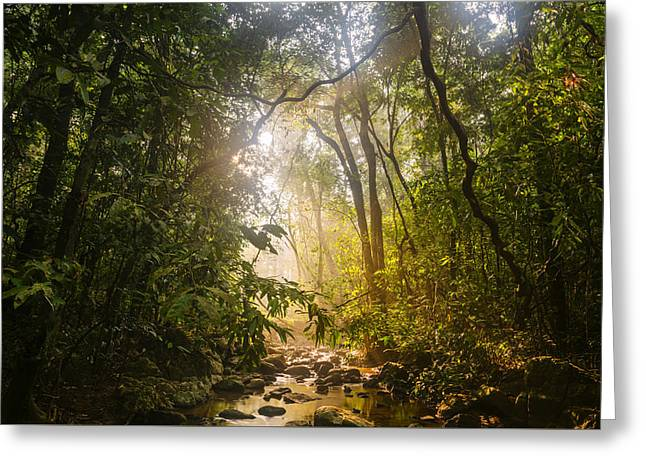 Forest Light At Western Ghats In Karnataka In India Greeting Card