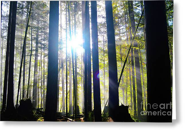 Forest Light Rays Greeting Card