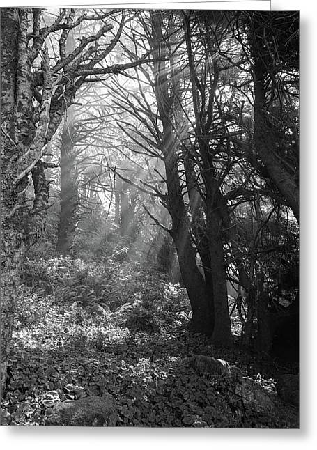 Forest Morning Greeting Card by HW Kateley