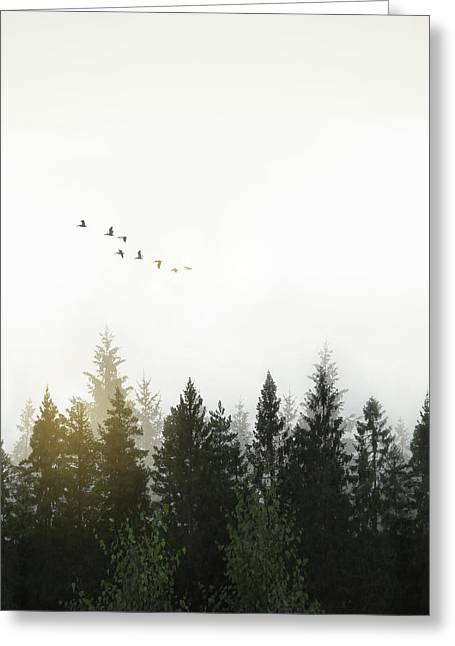 Forest Greeting Card by Nicklas Gustafsson