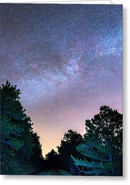 Forest Night Light Greeting Card by James BO Insogna