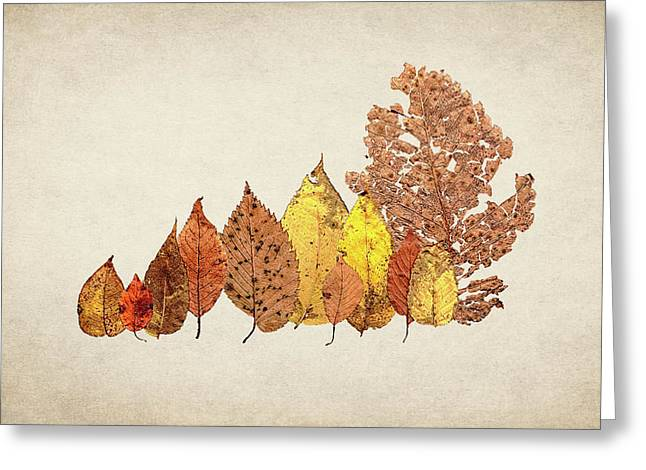 Forest Of Autumn Leaves II Greeting Card