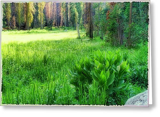 Greeting Card featuring the photograph Forest Of Color by Michael Cleere