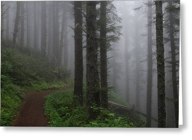 Forest Of Fog Greeting Card