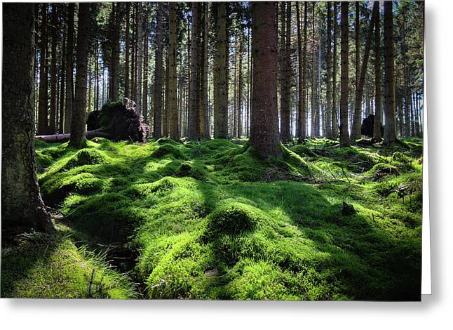 Forest Of Verdacy Greeting Card