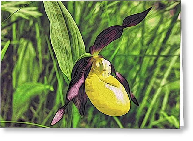 Forest Orchid Greeting Card by Alexandre Ivanov