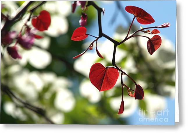 Forest Pansy Redbud Leaves In Spring Greeting Card by Anna Lisa Yoder