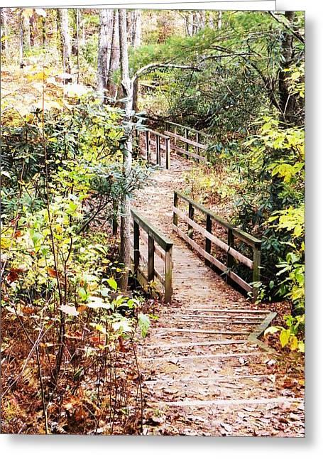 Forest Path Greeting Card by Cindy Gacha
