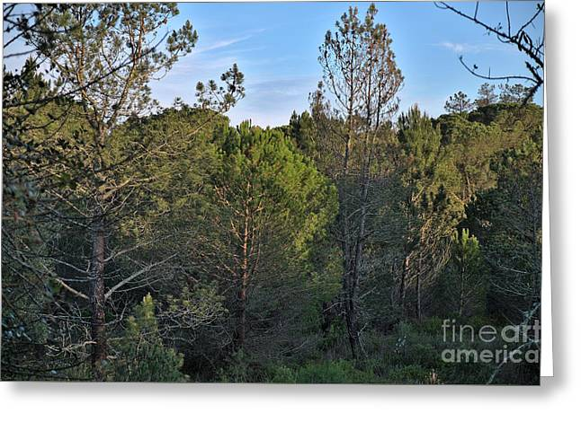 Forest Pine Trees At Sunset In Ludo Greeting Card