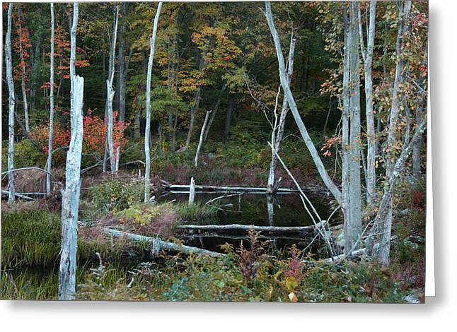 Greeting Card featuring the photograph Forest Pond by Joseph G Holland
