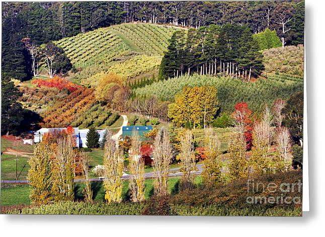 Forest Range, Adelaide Hills Greeting Card by Bill  Robinson