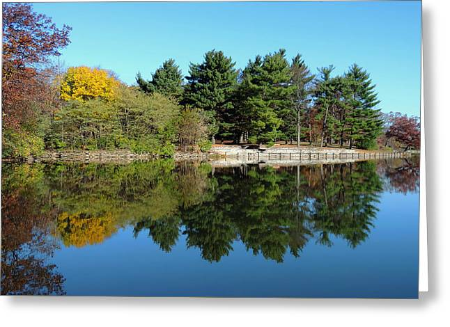 Forest Reflections Greeting Card by Teresa Schomig