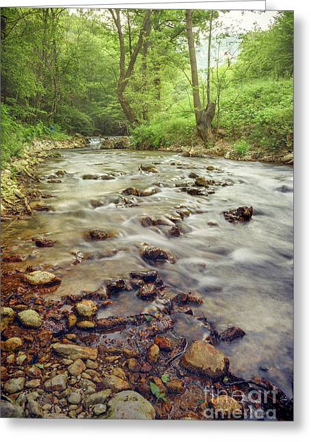 Forest River Cascades Greeting Card