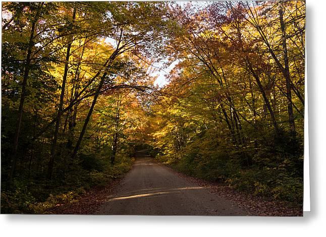 Forest Road - A Joy Ride Into Autumn Greeting Card by Georgia Mizuleva