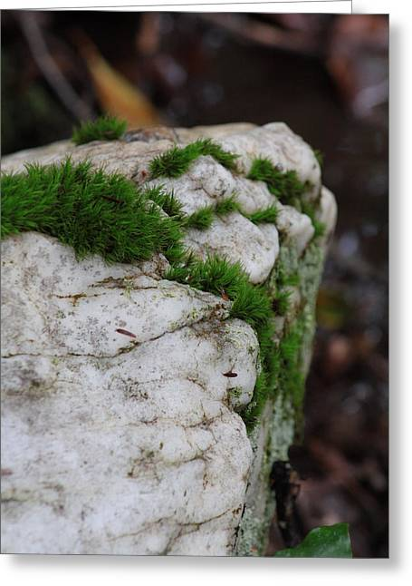 Forest Rock With Moss Greeting Card by Pamela Smith