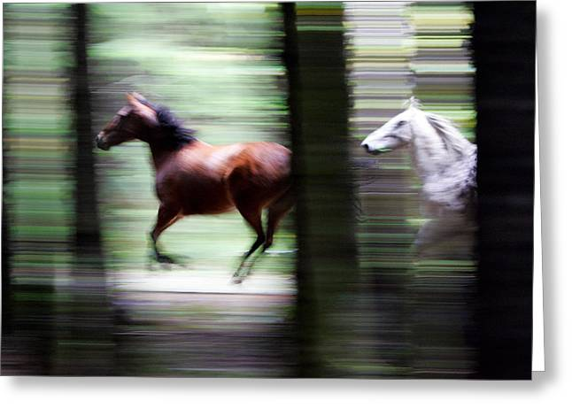 Forest Run Greeting Card by Randall Ingalls