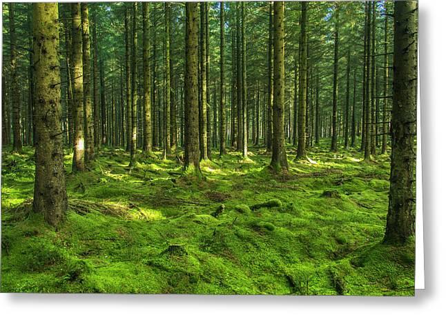 Forest Greeting Card by Sebastian Mendocha