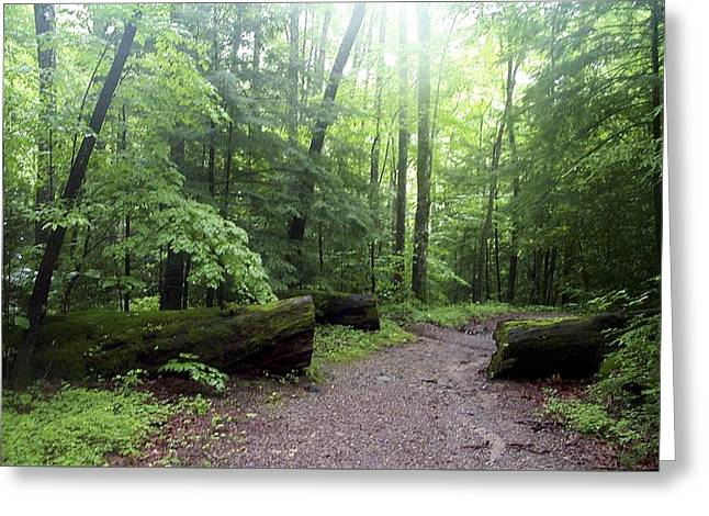 Forest Setting Smoky Mountains National Park Greeting Card