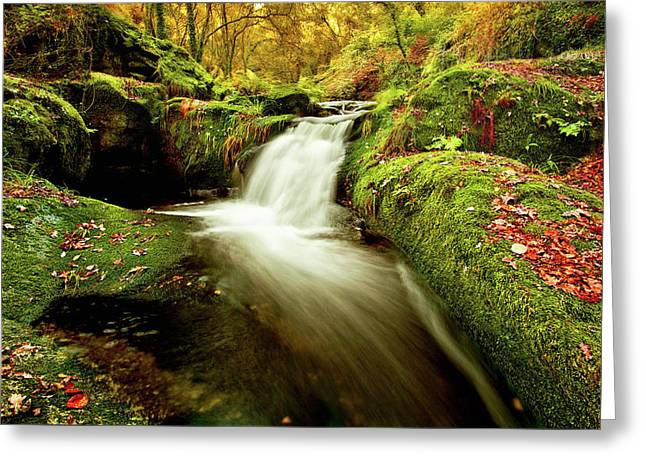 Greeting Card featuring the photograph Forest Stream by Jorge Maia