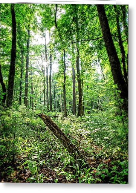 Greeting Card featuring the photograph Forest Sun by Alan Raasch