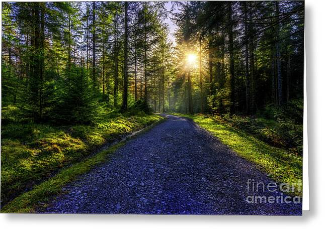 Greeting Card featuring the photograph Forest Sunlight by Ian Mitchell