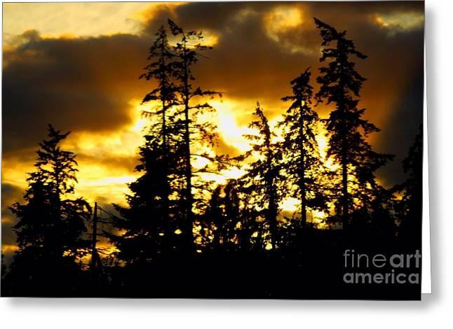 Greeting Card featuring the photograph Forest Sunset  by Nick Gustafson
