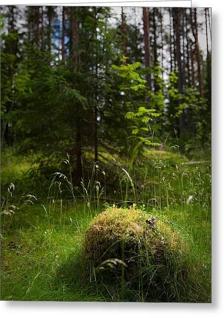 Forest Tales Greeting Card by Konstantin Dikovsky