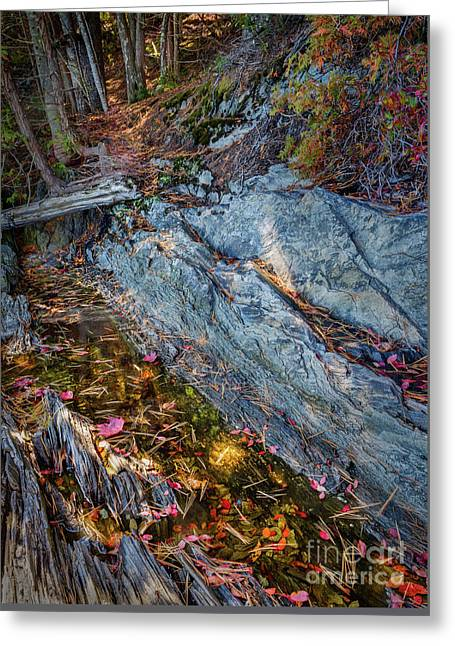 Forest Tidal Pool In Granite, Harpswell, Maine  -100436-100438 Greeting Card