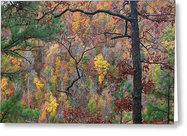 Forest Greeting Card by Tim Fitzharris