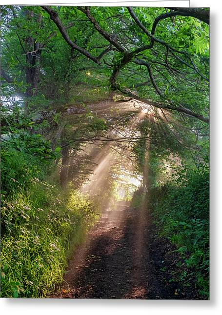 Greeting Card featuring the photograph Forest Trail by Fabrizio Troiani