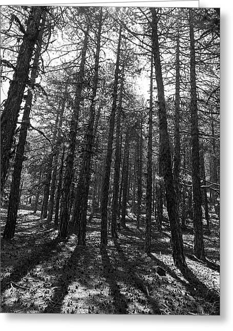 Forest Trees  Greeting Card by Michalakis Ppalis