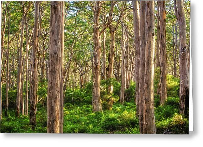 Forest Twilight, Boranup Forest Greeting Card