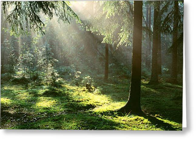 Forest Uppland Sweden Greeting Card by Panoramic Images