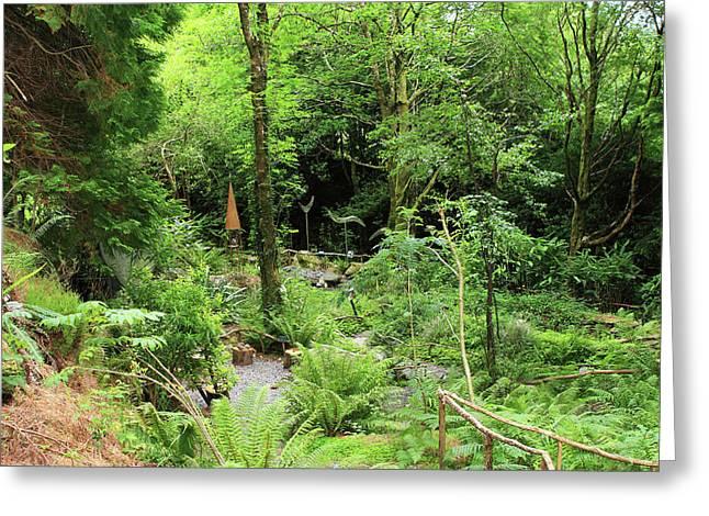 Forest Walk Greeting Card by Aidan Moran