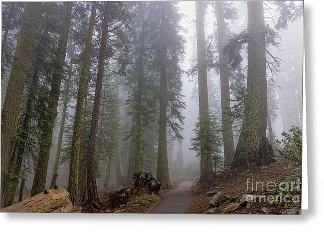 Greeting Card featuring the photograph Forest Walking Path by Peggy Hughes