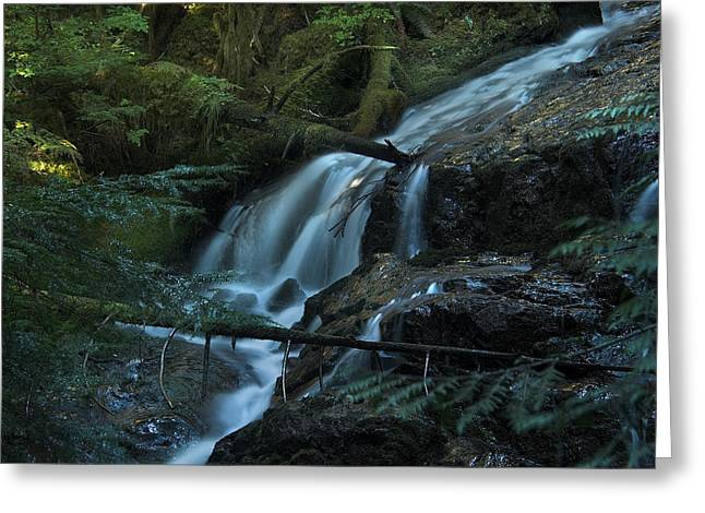 Forest Waterfall. Greeting Card