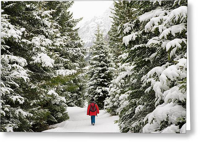 Forest With Snow Covered Trees In Austria Greeting Card by Matthias Hauser