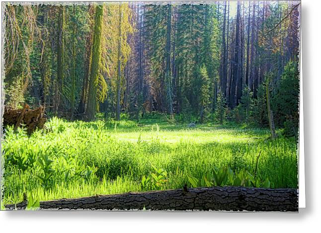 Foresta Greeting Card