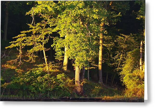 Forests Edge Greeting Card
