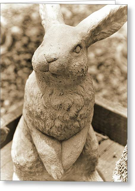 Forever Buck Bunny Greeting Card by JAMART Photography