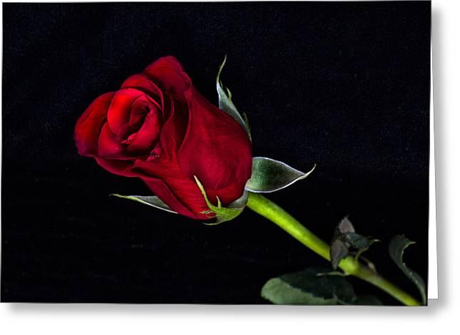 Forever Lasting Rose  Greeting Card