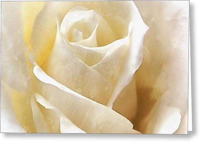 Greeting Card featuring the photograph Forever More - Ivory Rose by Janine Riley