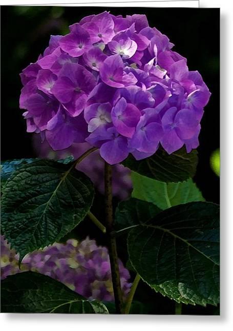 Forever Violet Greeting Card
