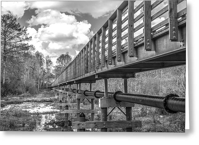 Forever Wild Trail Black And White Greeting Card by Jeremy Raines