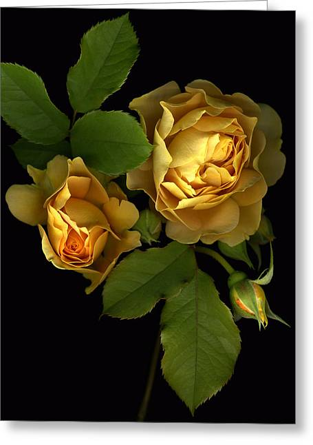 Forever Yellow Roses Greeting Card by Deborah J Humphries