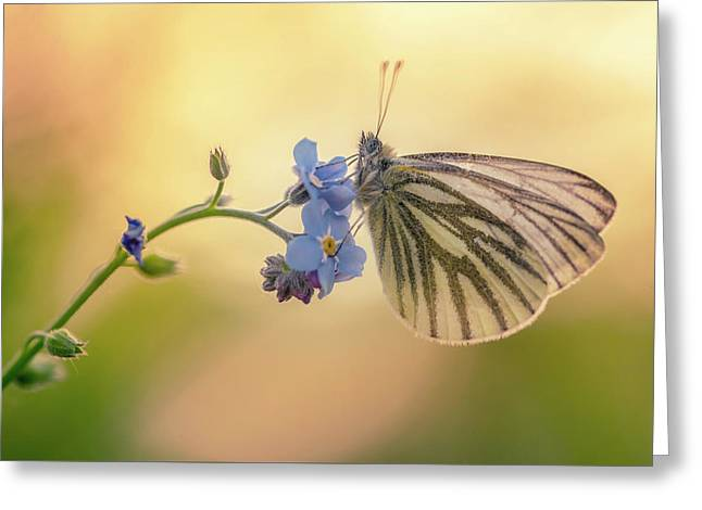 Forget Me Not Greeting Card by Jaroslaw Blaminsky