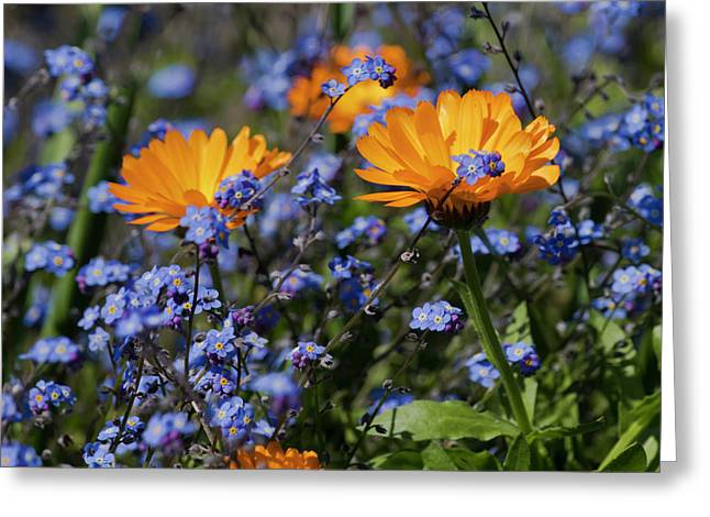 Forget-me-not Marigold Greeting Card