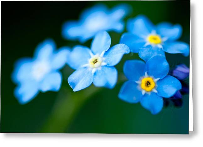 Forget Me Not  Greeting Card by Venura Herath