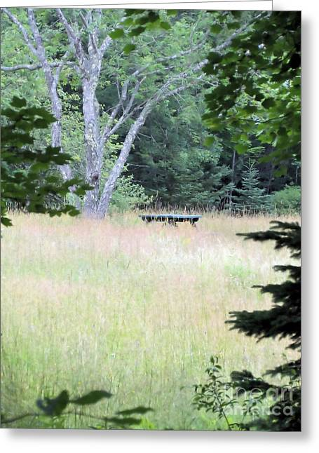Forgotten Picnic Table Greeting Card by Elizabeth Dow
